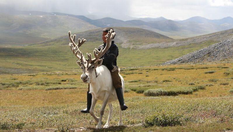 Tipi mongolei